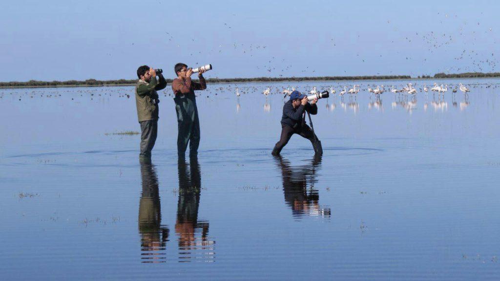 مقاله پرندهنگری، پرندهنگرها و تاریخچهی آن در ایران و جهان